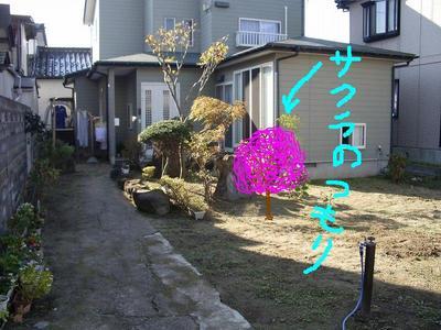 IMGP0482sakura.jpg